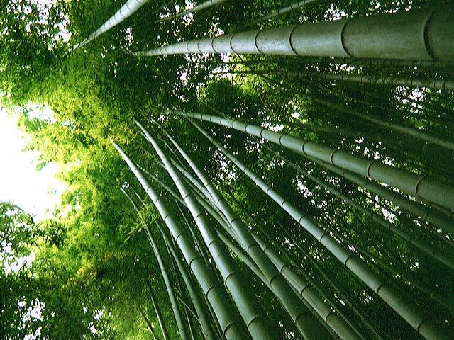 http://www.yunphoto.net/mid/yun_209.jpg