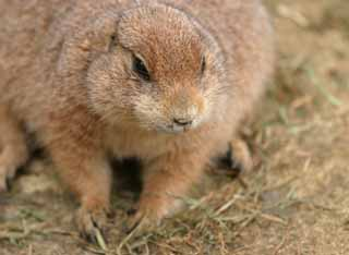 photo,material,free,landscape,picture,stock photo,Creative Commons,Whiskers of a prairie dog, rodent, , ,