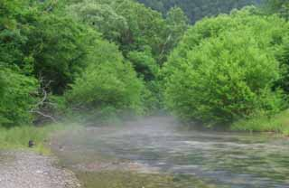 photo,material,free,landscape,picture,stock photo,Creative Commons,Hazy stream, river, tree, water,