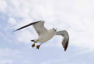 photo,material,free,landscape,picture,stock photo,Creative Commons,Greeting of a seagull, seagull, sky, sea,