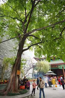 photo,material,free,landscape,picture,stock photo,Creative Commons,A SixBanyanTreeTemple linden tree, Chaitya, trunk, Faith, tourist attraction