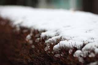 photo,material,free,landscape,picture,stock photo,Creative Commons,The snow of the park, garden plant, , ,