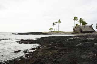 photo,material,free,landscape,picture,stock photo,Creative Commons,Mauna Lani, Lava, palm, wave, power spot