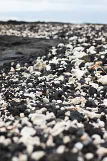 photo,material,free,landscape,picture,stock photo,Creative Commons,White and the black shore, Lava, palm, wave, southern country