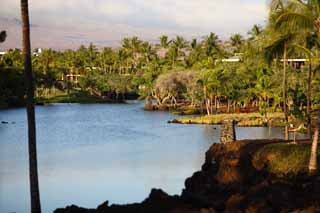 photo,material,free,landscape,picture,stock photo,Creative Commons,MaunaLani fish pound, Lava, An altar, pond, Fishery