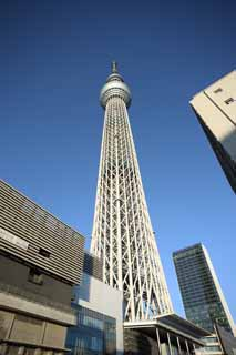 photo,material,free,landscape,picture,stock photo,Creative Commons,Look up at the sky tree, An electric wave tower, sightseeing spot, tower, blue sky