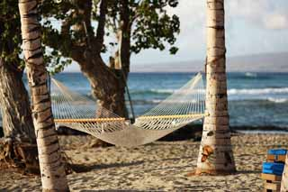 photo,material,free,landscape,picture,stock photo,Creative Commons,Hammock Hawaii Island, , , ,