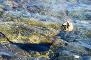 photo,material,free,landscape,picture,stock photo,Creative Commons,Hawaii Island Sea Turtle, , , ,