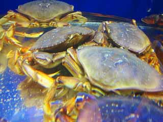 photo,material,free,landscape,picture,stock photo,Creative Commons,crab, , , ,