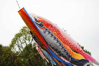 photo,material,free,landscape,picture,stock photo,Creative Commons,carp streamer, , , ,