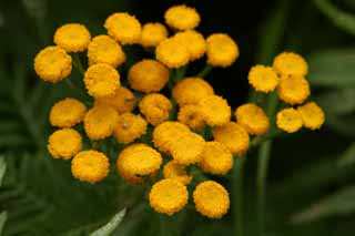 photo,material,free,landscape,picture,stock photo,Creative Commons,Small orange flowers, yellow, orange, ,