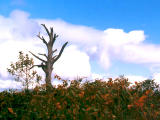 photo,material,free,landscape,picture,stock photo,Creative Commons,Dead tree, , , ,