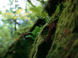 photo,material,free,landscape,picture,stock photo,Creative Commons,Fern and moss, , , ,