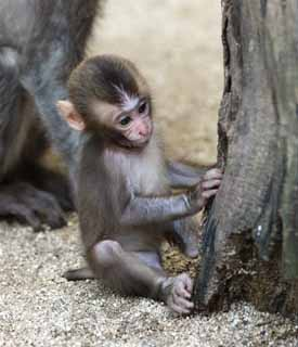 photo,material,free,landscape,picture,stock photo,Creative Commons,Baby of the Japanese monkey, , , ,
