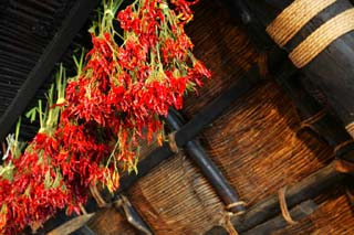 photo,material,free,landscape,picture,stock photo,Creative Commons,Cayenne in attic, Architecture with principal ridgepole, Thatching, private house, red pepper
