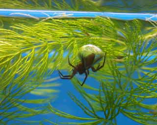 photo,material,free,landscape,picture,stock photo,Creative Commons,Water spider, , , ,