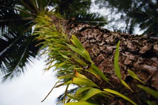 photo,material,free,landscape,picture,stock photo,Creative Commons,Grass of the bark, fern, , coconut tree, The bark