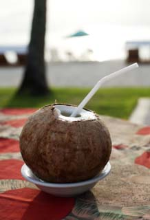 photo,material,free,landscape,picture,stock photo,Creative Commons,A special coconut lamb punch, coconut, Drink, Liquor, straw