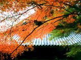 photo,material,free,landscape,picture,stock photo,Creative Commons,Maple and Eikando (Zenrinji Temple), autumn leaves, , ,