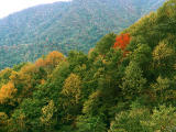 photo,material,free,landscape,picture,stock photo,Creative Commons,Autumn leaves in the mountain, , , ,