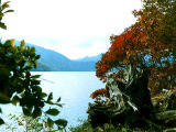 photo,material,free,landscape,picture,stock photo,Creative Commons,Autumn leaves on Chuzenji Lake, , , ,