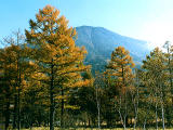 photo,material,free,landscape,picture,stock photo,Creative Commons,Mt. Nantaisan and autumn trees, , , ,