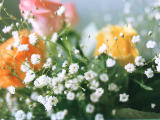 photo,material,free,landscape,picture,stock photo,Creative Commons,Bouquet, bouquet, , ,