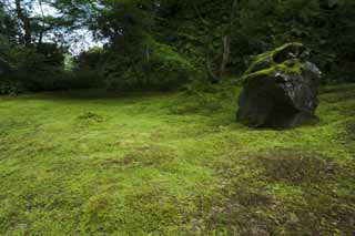 photo,material,free,landscape,picture,stock photo,Creative Commons,The House of encyclopedic knowledge of Matsushima, Moss, rock, ,