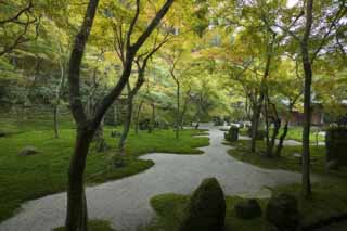 photo,material,free,landscape,picture,stock photo,Creative Commons,A garden of a light temple belonging to the Zen sect, Moss, , rock, Colored leaves