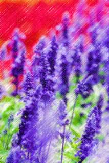 illustration,material,free,landscape,picture,painting,color pencil,crayon,drawing,A blue sage, lavender, flower garden, Bluish violet, Herb