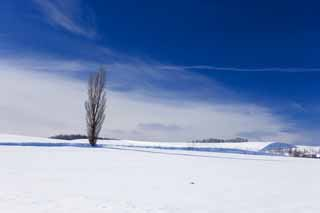 photo,material,free,landscape,picture,stock photo,Creative Commons,A snowy field, snowy field, mountain, tree, blue sky