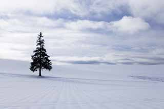 photo,material,free,landscape,picture,stock photo,Creative Commons,A snowy field of a Christmas tree, snowy field, cloud, tree, blue sky