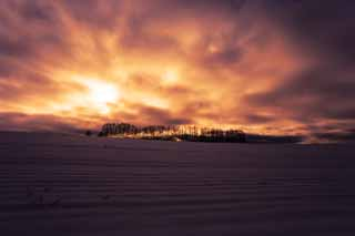 photo,material,free,landscape,picture,stock photo,Creative Commons,Dusk of a snowy field, snowy field, cloud, tree, The sun