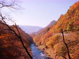 photo,material,free,landscape,picture,stock photo,Creative Commons,Agatsuma Valley in autumn, autumn leaves, , ,