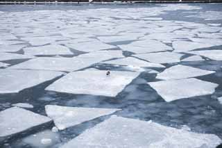 photo,material,free,landscape,picture,stock photo,Creative Commons,Patchwork of drift ice, Drift ice, Ice, gull, Drifting