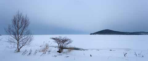 photo,material,free,landscape,picture,stock photo,Creative Commons,Winter of Lake Saroma, lake, White birch, It is snowy, pond smelt