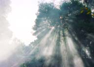 photo,material,free,landscape,picture,stock photo,Creative Commons,Sunlight filtering through smoke, mist, shadow, sun, tree