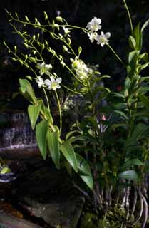 photo,material,free,landscape,picture,stock photo,Creative Commons,An orchid of a waterside, , An orchid, , waterfall