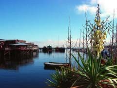 photo,material,free,landscape,picture,stock photo,Creative Commons,Quiet afternoon wharf, sea, port, blue sky, agave