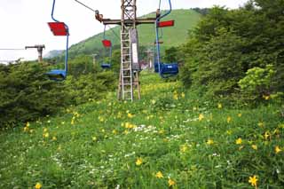 photo,material,free,landscape,picture,stock photo,Creative Commons,A ski lift in Kisuge plateau, ski lift, I am similar, and a kid is isolated and fixes it, day lily, Nikko