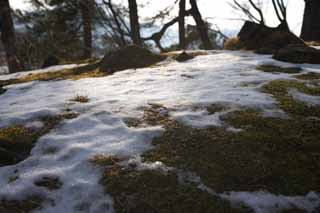 photo,material,free,landscape,picture,stock photo,Creative Commons,Snow is piled up, tree, hill, Lake Onuma, Moss