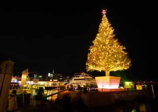 photo,material,free,landscape,picture,stock photo,Creative Commons,A Christmas tree of Hakodate, Christmas tree, X'mas, sacred night, port