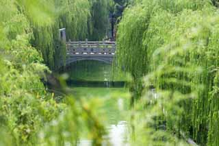 photo,material,free,landscape,picture,stock photo,Creative Commons,A canal of Suzhou, willow, canal, waterside, bridge