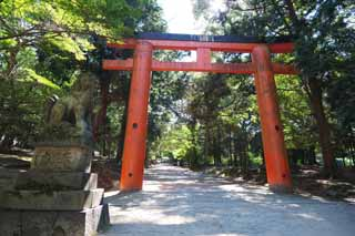 photo,material,free,landscape,picture,stock photo,Creative Commons,A way with the torii, torii, An approach to a shrine, I am painted in red, The shade of a tree