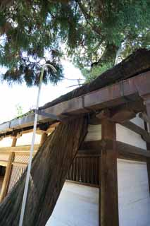 photo,material,free,landscape,picture,stock photo,Creative Commons,A Kasuga Taisha Shrine feast roof, Shinto, Shinto shrine, Nature, huge tree
