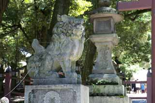 photo,material,free,landscape,picture,stock photo,Creative Commons,Kasuga Taisha Shrine pair of stone guardian dogs, pair of stone guardian dogs, top dog, stone statue, The shade
