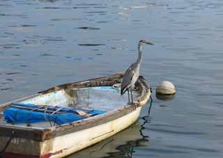 photo,material,free,landscape,picture,stock photo,Creative Commons,A heron, Oh, it is a heron, heron, , boat