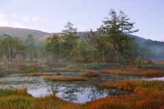 photo,material,free,landscape,picture,stock photo,Creative Commons,Autumn of the marshland, pond, tree, mountain, fog