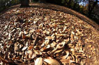 photo,material,free,landscape,picture,stock photo,Creative Commons,Autumn Park, Fallen leaves, Defoliation, Trees, Ground