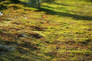 photo,material,free,landscape,picture,stock photo,Creative Commons,A carpet of moss, Moss, , , Kyoto
